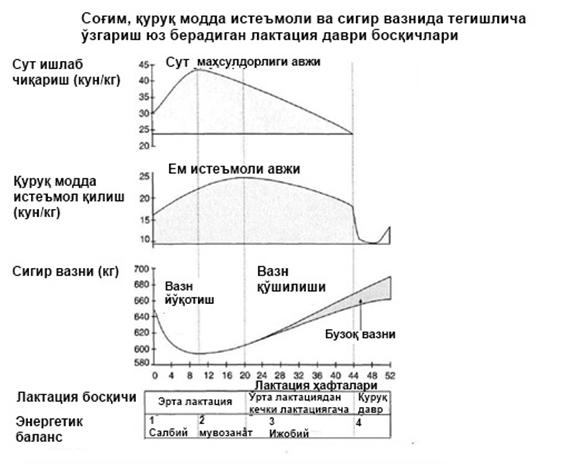 cattle_adaptation_18_uzb.jpg